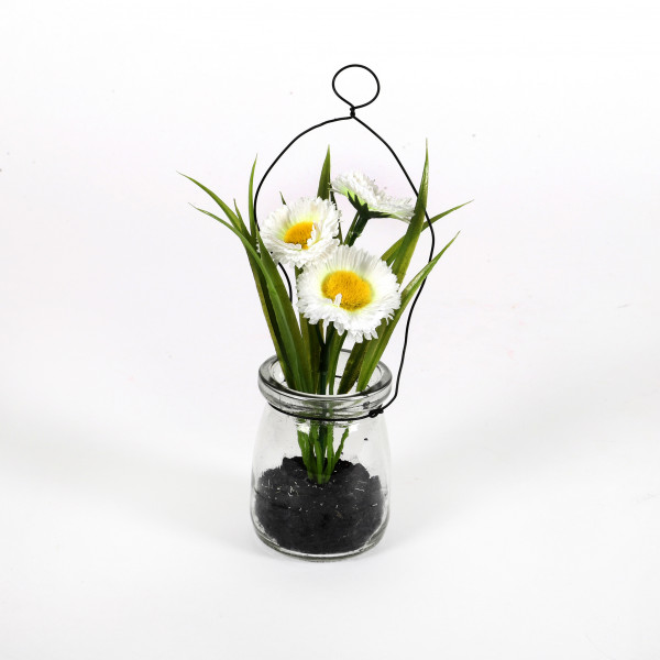 Bellis in Vase, 15 cm