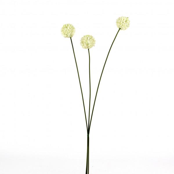 Allium, 86cm, Bund/3 St., creme