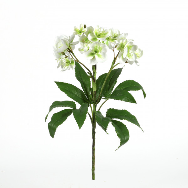 Christrosen-Busch, 59 cm, XXL x 14, 4 Knospen, weiß