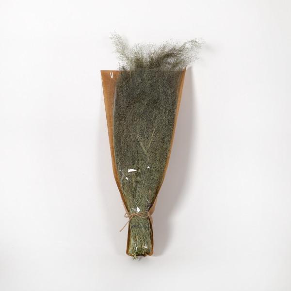 Agrostis Nebulosa Gras Bund 100 gr. natur