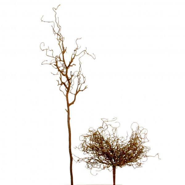 Curly Willow-Busch x 13, 30 cm braun