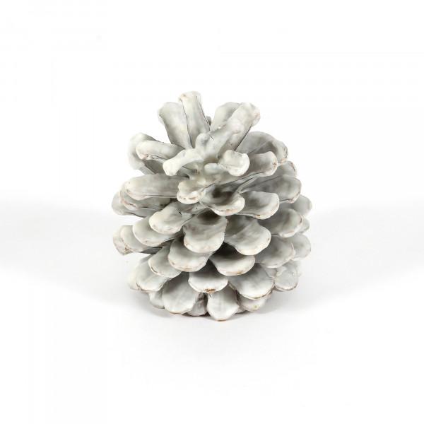 Pinus Nigra gewachst weiß Blt. 12 Stück Zapfen