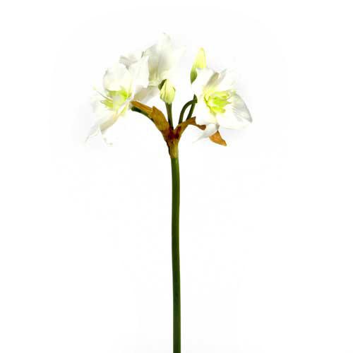 Eucharis, 53 cm, weiß
