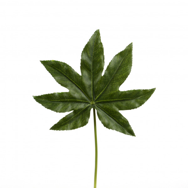 Fatsia-Blatt, 34 cm, grün