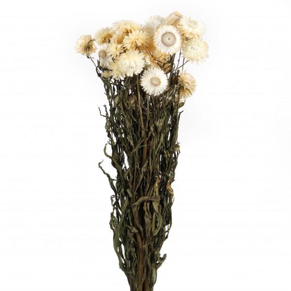 Helichrysum weiß Bund 250 gr