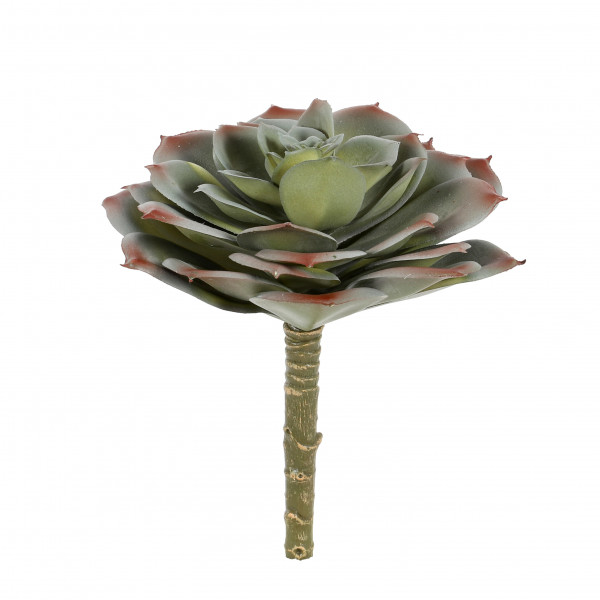 Echeveria, 15 cm, grau-grün