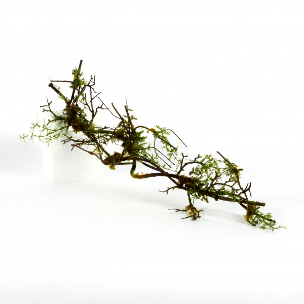 Moos-Farn-Geäst, 76 cm, grün