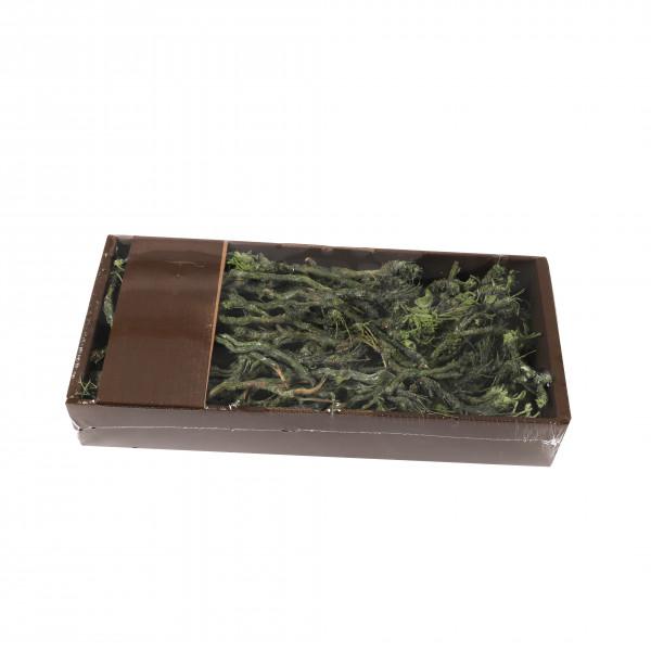 Stachy Tray 750 gr grün frostet