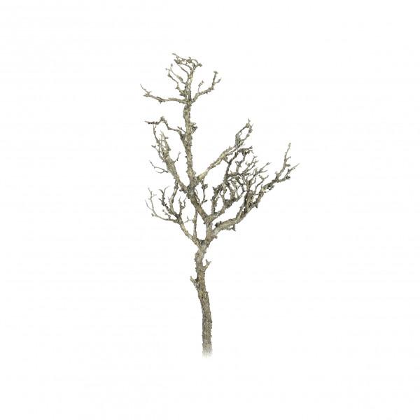 Manzanita-Ast, knorrig-bemoost, natur 78.5 cm