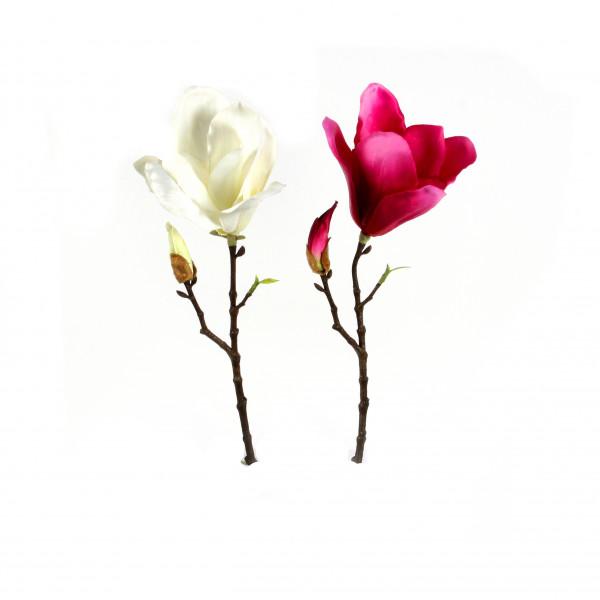 Magnolienzweig, kurzstielig, Tulpenform