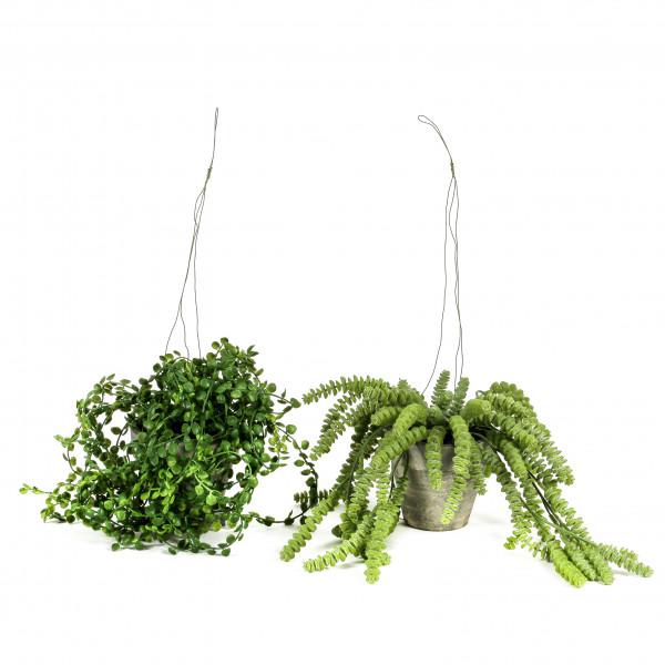 Weiden-Pflanze getopft hängend 68cm, grün
