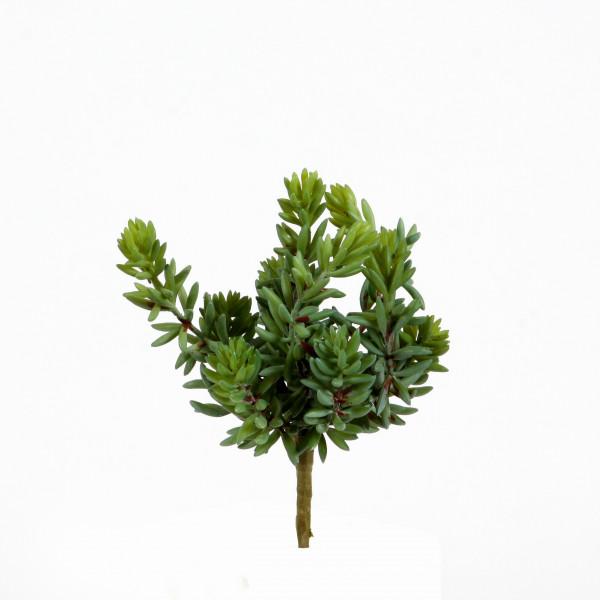 Sedum-Busch,19cm, grün