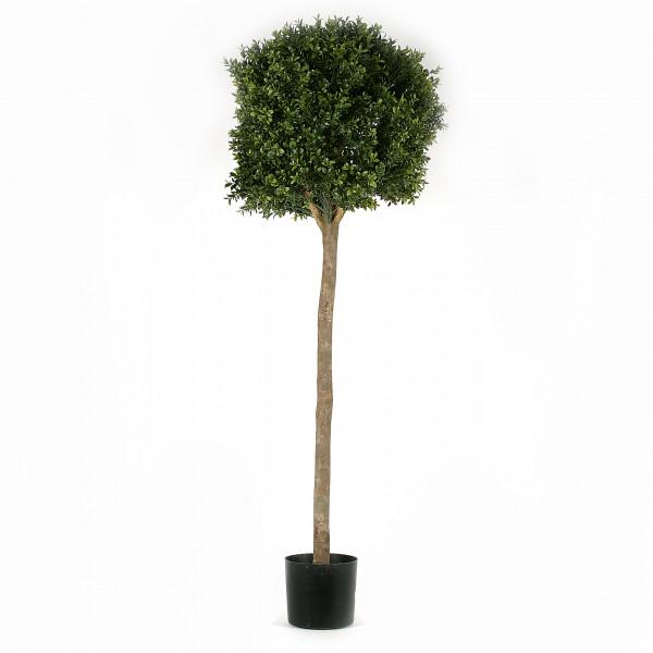 Kugelbuchsbaum, 120cm