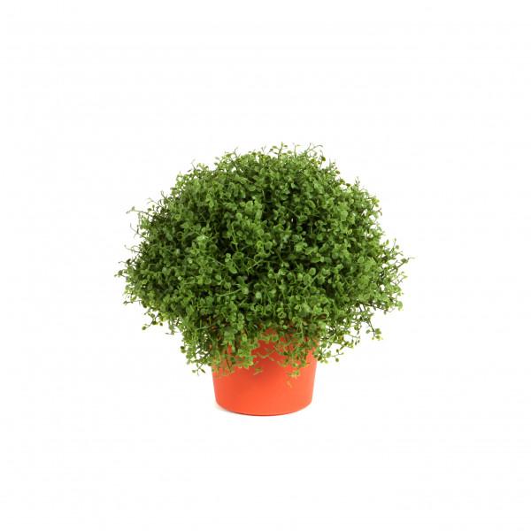 Bubikopf, 20 cm, grün