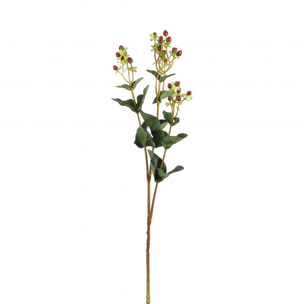 Hypericum, 70cm, rot-orange
