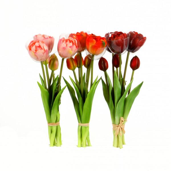 Tulpe Amsterdam , Kurzbund, 24cm