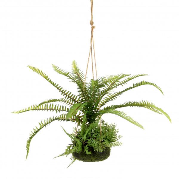 Farn hängend in Mooskugel, 51 cm, grün