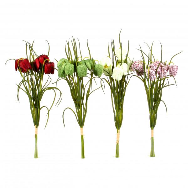 Frittilaria, 35cm, Bund/8 St.