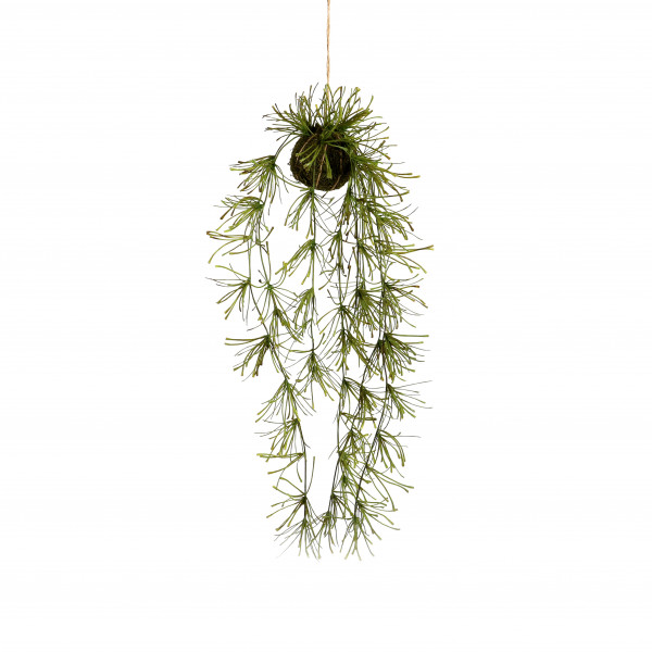 Rhipsalis-Hänger im Moosball, 75 cm, grü