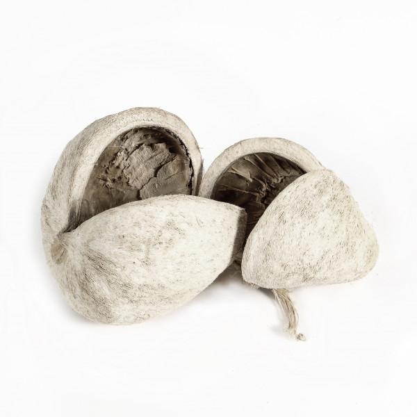 Buddha Nut frostet (Polybeutel x 10 Stück )