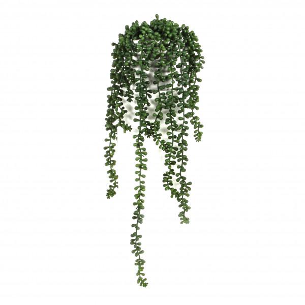 Erbsenstrauch, getopft, 56 cm, grün