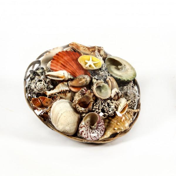 Muschelmix im Korb 20cm natur