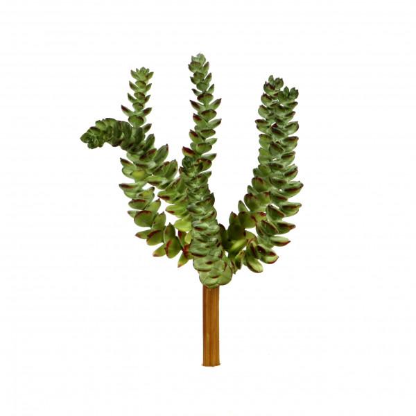 Crassula, 22 cm, grün