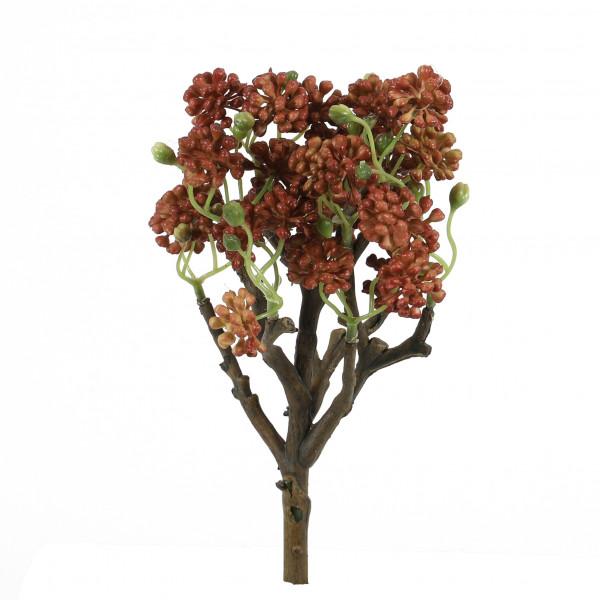Sedum-Busch, 25 cm, rost-braun