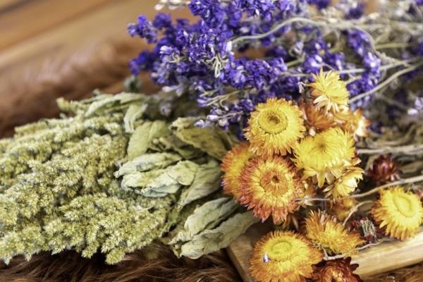 Helichrysum_Trockenblumen_bltx3FoHR9XkZNi
