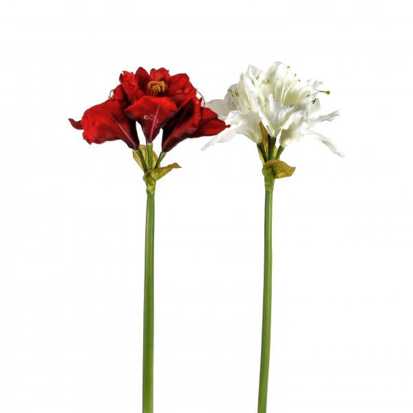 Amaryllis x 4, 63 cm