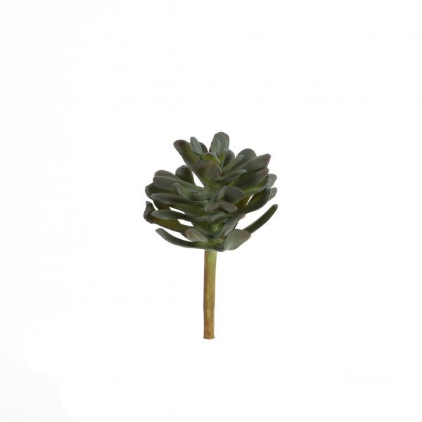 Crassula, 13 cm, grau-grün