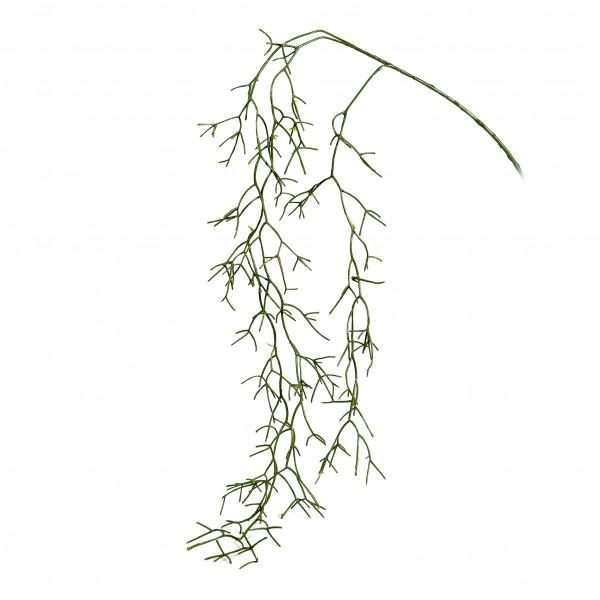 Rhipsalishänger, 160 cm, grün