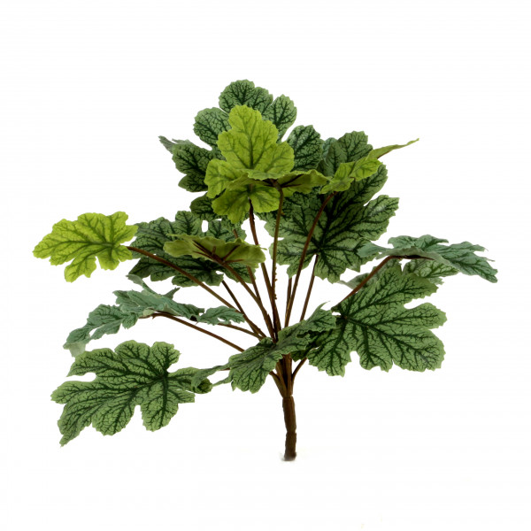 Heuchera, 28 cm, grün
