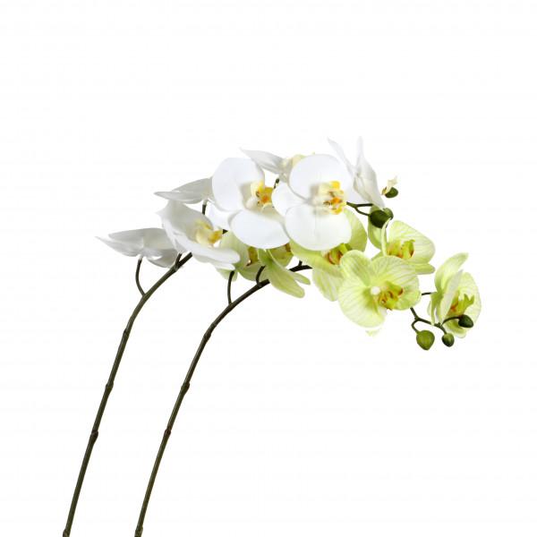 Phalaenopsis-Zweig x 7 Blüten 79 cm