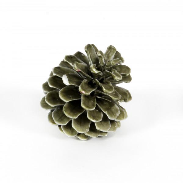 Pinus Nigra gewachst grün Blt. 12 Stück Zapfen