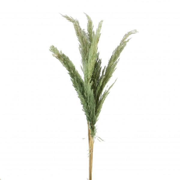 PAMPAS GRASS 5 Stk / Bund 115 cm mint grün
