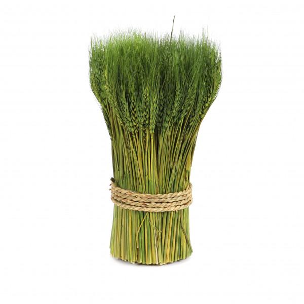 Weizen Bouquet 30 cm grün 300gr