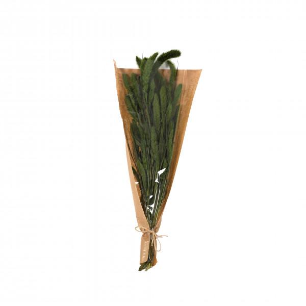 Setaria Gras 50-60 cm Bund 100 gr. grün