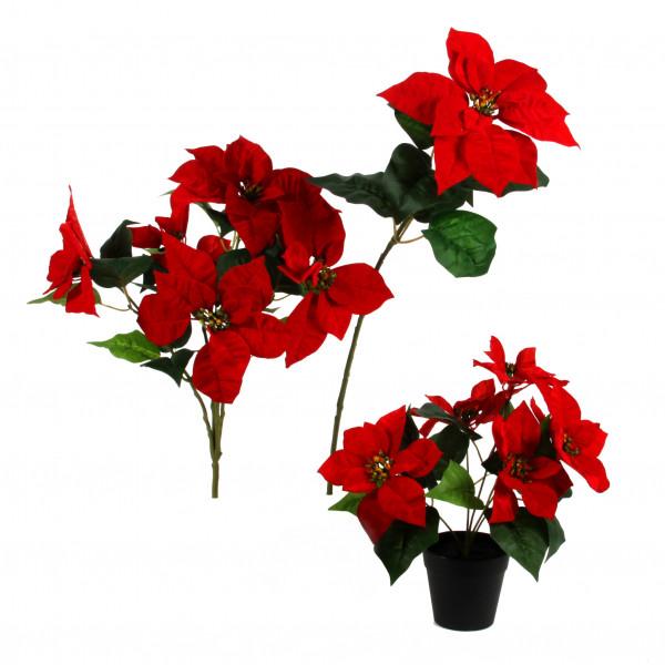 Poinsettia-Busch x 5, 45cm,rot