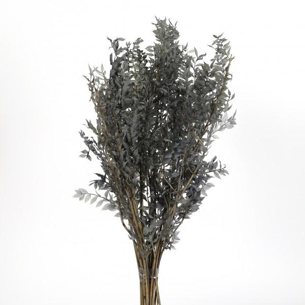 Ruscus silbergrau Blt x 400 gr