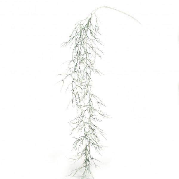 Rhipsalis-Hänger, 144 cm, crem e-grün