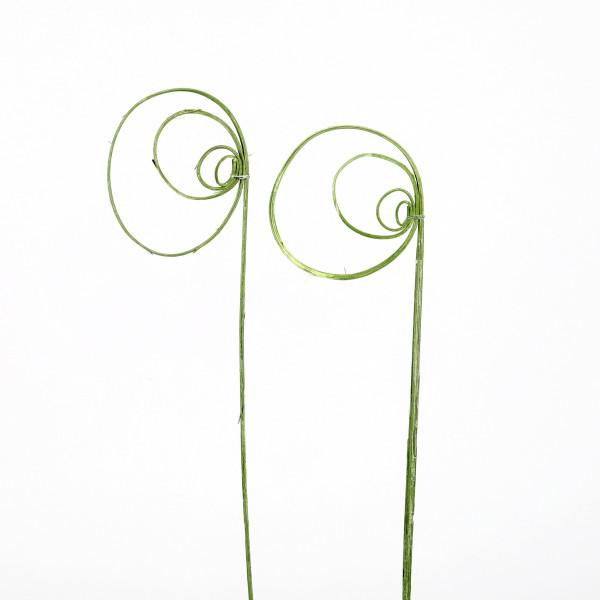Rohrkreisel Cane coil ( Fensterkarton x 40 St.) grün white washed