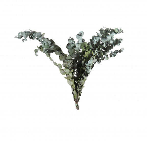 Eukalyptus Cynerea Btl. x 300 gr. grün