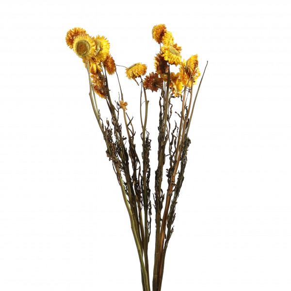 Chrysanthymum gelb Bund 12 Stück