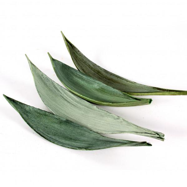 Coco medium Blt x 25 Stück grün frostet