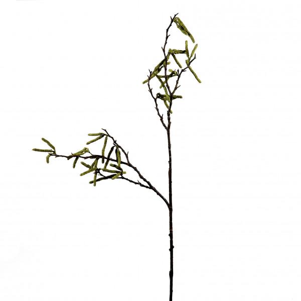 Birkenzweig mit Blütenstand, 104cm