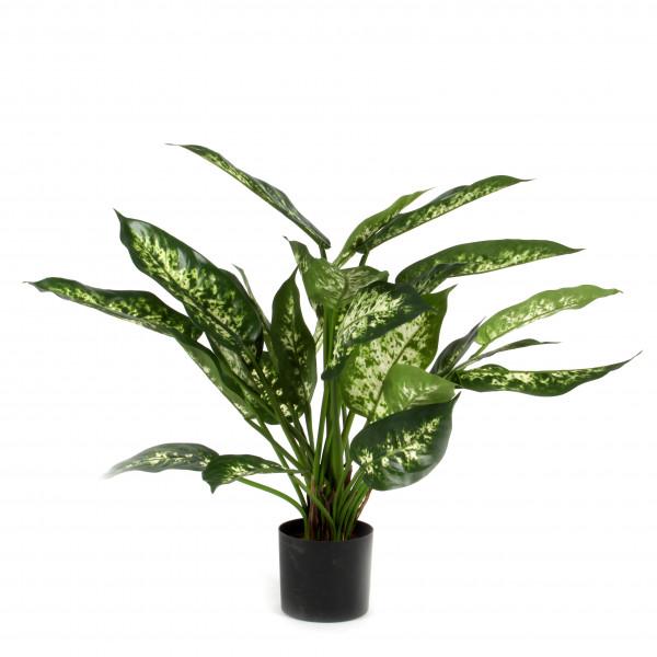 Dieffenbachia, 51 cm, getopft, grün-creme