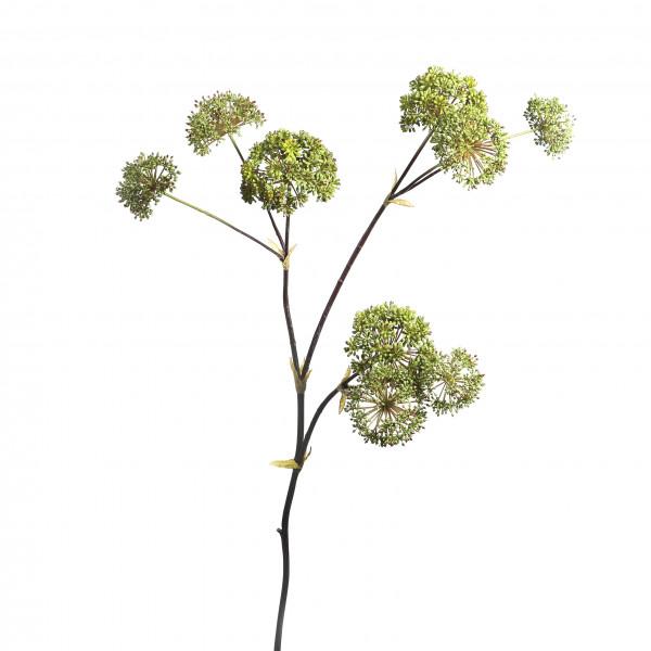 Engelwurz x 9, 133 cm, grün