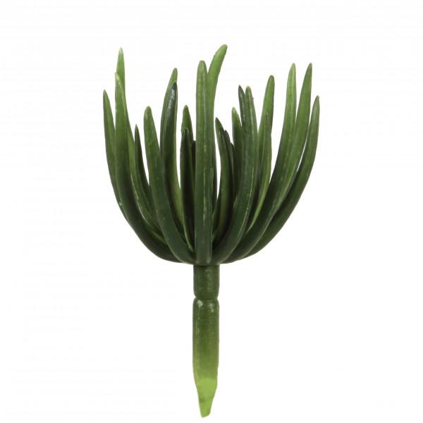 Echeveria, 18 cm, Spinnenform , dk. grün