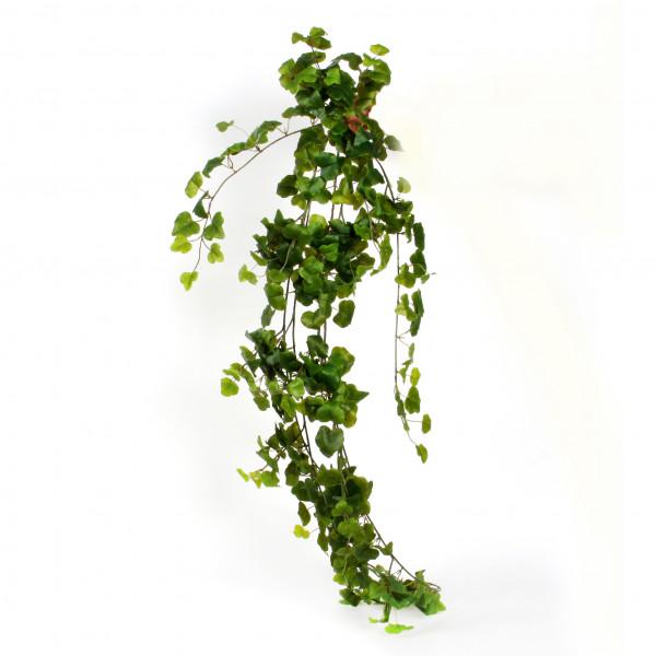 Efeuhänger Irland , 80 cm, grün